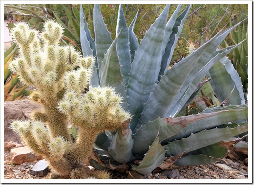 120728_ArizonaSonoraDesertMuseum_074