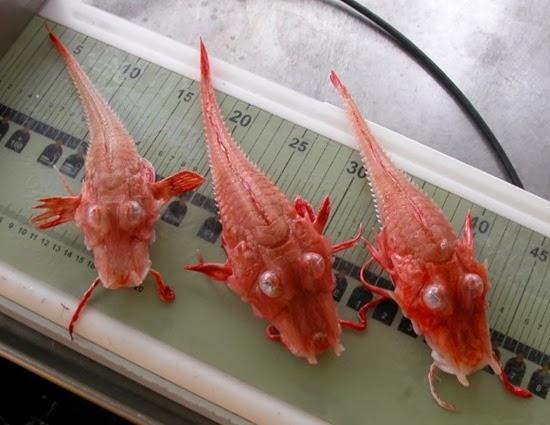 Peixe da Malásia 04