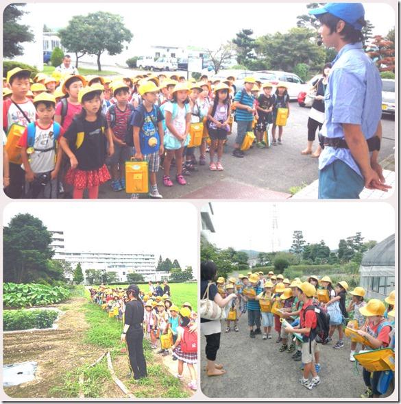 2013附属小学校農場見学