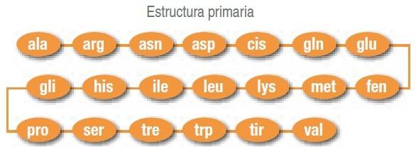 estructura primaria proteinas