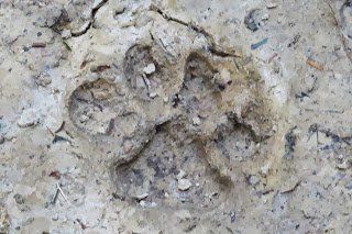 Puma footprint by Hanna Jones