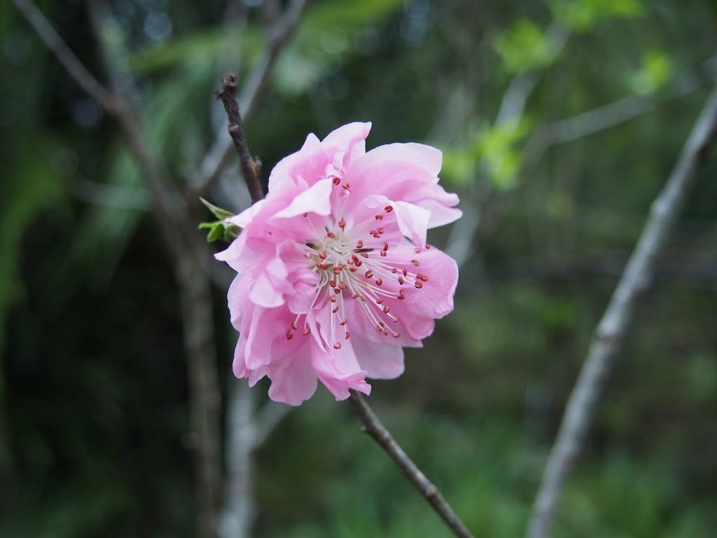 春遊桃源仙谷