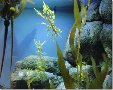 aquarium 212