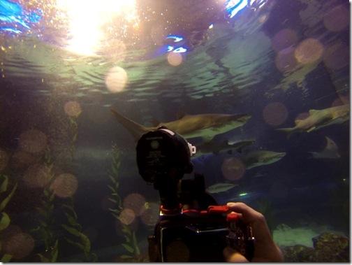 aquarium (5)