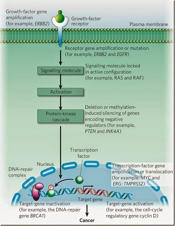 examples oncogene
