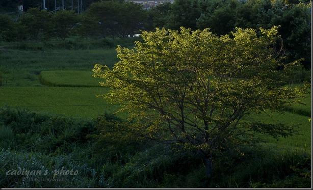 D700_2012-08-19_010