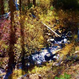Alder Creek by Samantha Linn - Landscapes Forests