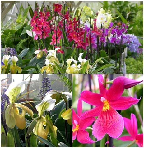 25 orchids