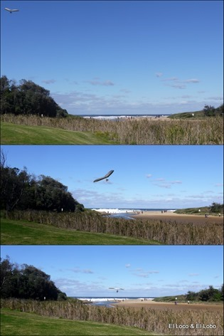 Hang glider landing on Stanwell Park beach