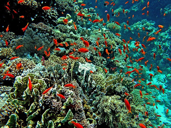 Red Sea Coral Reef 03