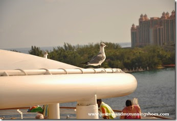 Disney Cruise Line Disney Magic (12)