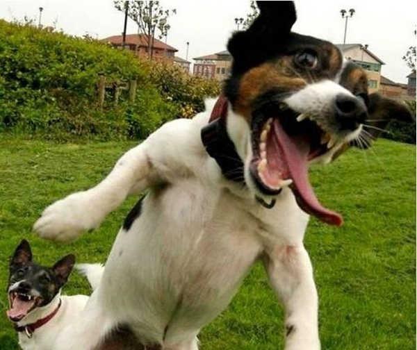 Animais tambem sabem rir 16