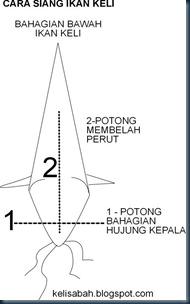 cara siang ikan keli