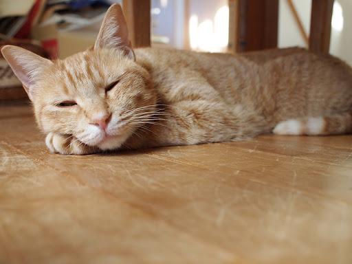 [写真]床暖房でくつろぐドーラ