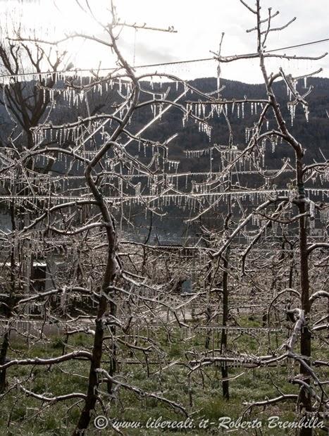 2014-03-3-25_Meleto ghiacciato_Villa di Tirano (5)