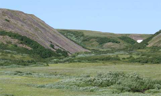 In a warming region of the Arctic, tundra shrubs are turning into small trees, with big implications. B.C. Forbes