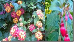 flores vs