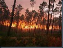 queimadas_florestas_homem_branco