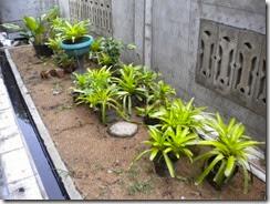 diletakkan pot bunga sebagai penghias dan penyerap CO2