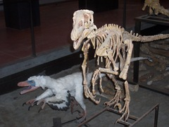 2008.09.05-009 Variraptor