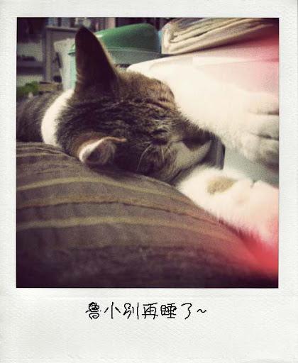 09-POLA_2.jpg