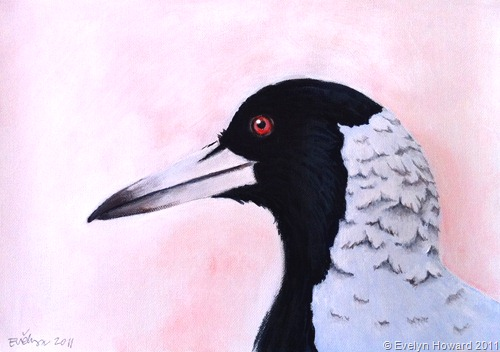 Acrylics Magpie © Evelyn Howard 2011