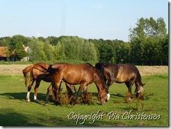 Heste ved Saltbæk