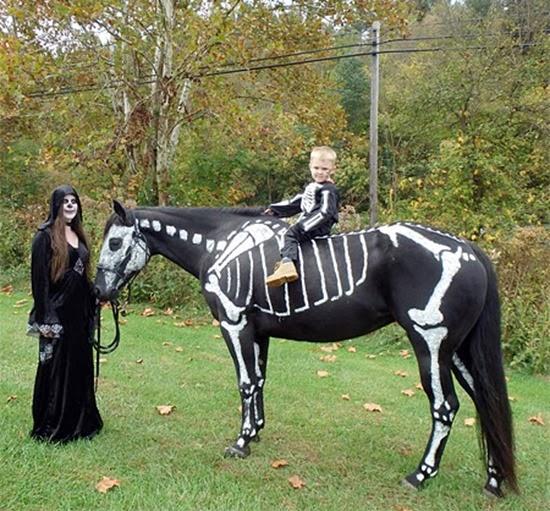 Cavalo esqueleto 08