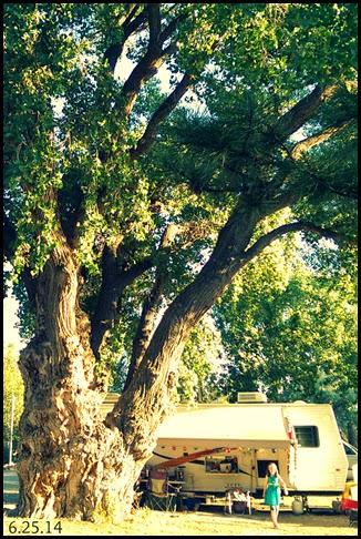 big tree & rv