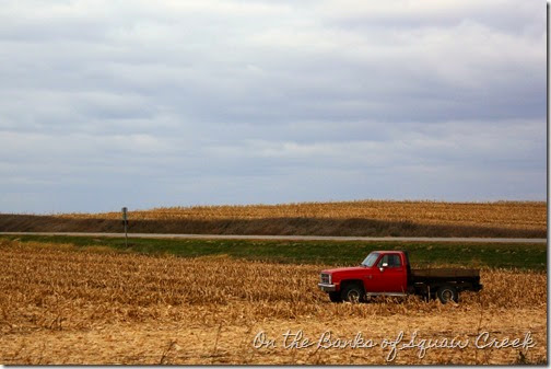fall corn field
