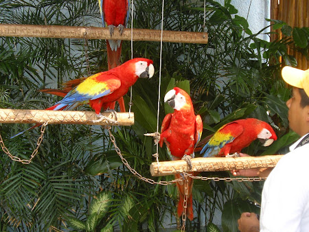 Parrots  from Cancun