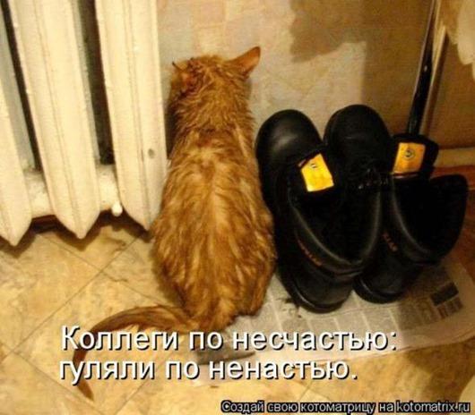 fe570a11eb7c52335d3ace4a8ea_prev
