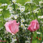 angkorsite_flower_1 (116).jpg