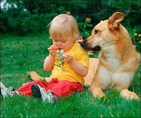 σκυλακιπαιδι