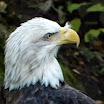 Philadelphia Zoo - Birds