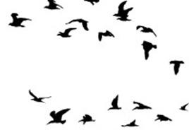 birdsss