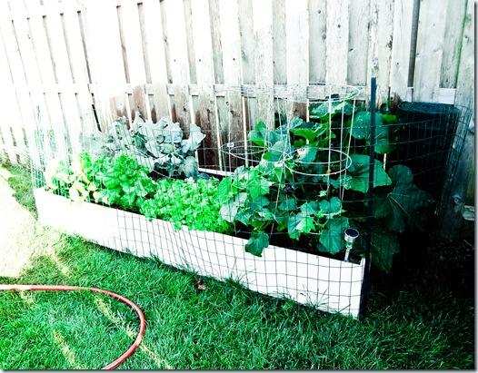 Garden June 11-7