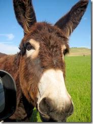 a - donkey