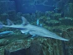 2015.01.25-055 requin