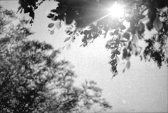 The-Leaves-2---Film
