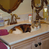Riley in the bathroom sink.