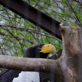 Heidelberger-Zoo (24 von 49).jpg