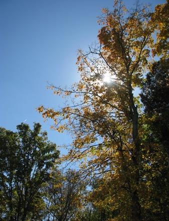 Oct 15 2010 008