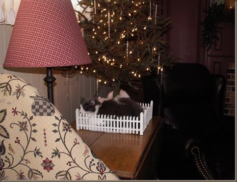 Lola under tree 3