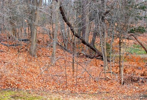 2. woods-kab