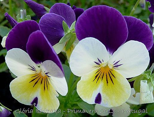 Glória Ishizaka - Primavera 2013 - 43