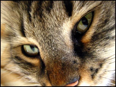 Kizi closeup
