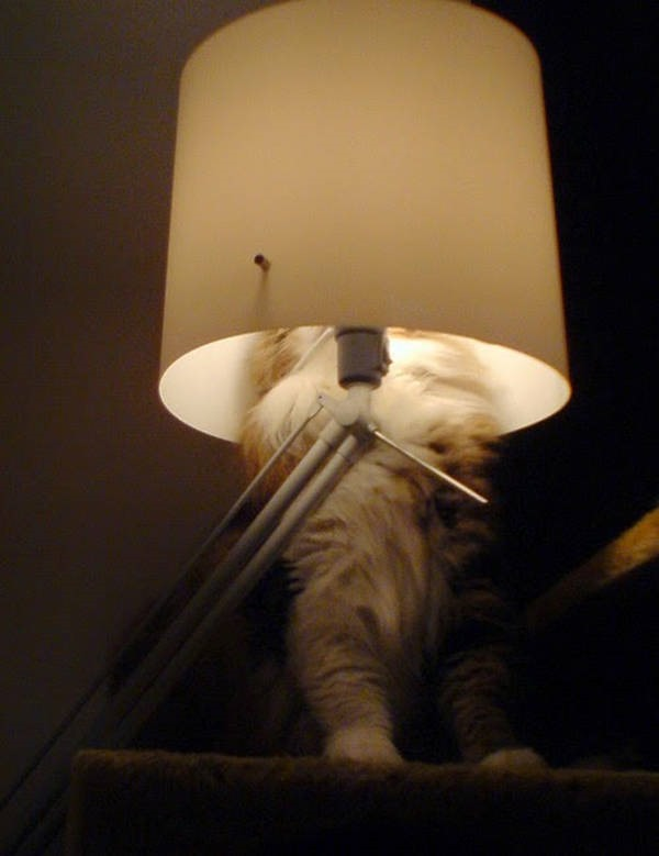 Os gatos não são muito bons em esconde-esconde 4