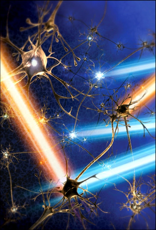abejas neuronas