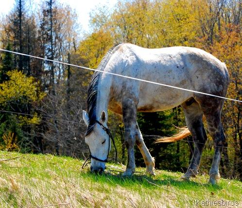 5. horse-kab